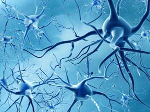 Rendering of neurons
